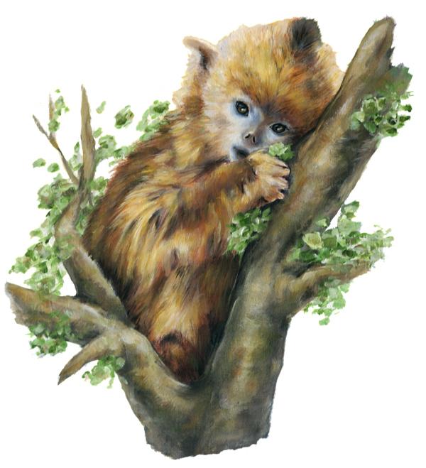 baby_golden_snub-nosed_monkey